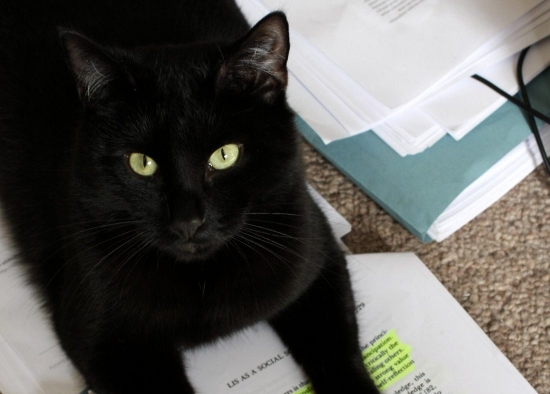 Marcel, a black domestic shorthair cat with pale green eyes, sits on a printed out and highlighted copy of Archie L. Dick's article 'Library and information science as a social science: neutral and normative conceptions'.